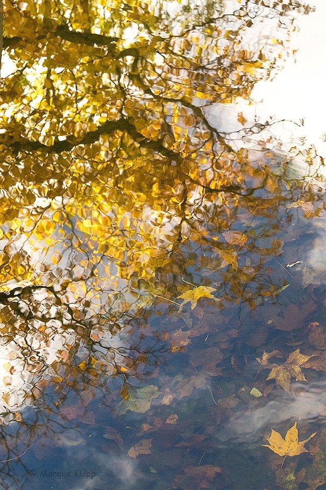 Lehed langevad